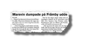 Så här stod det att läsa i tidningen i höstas om hur två marsvin dumpats på Främby udde, varav ett dött och det andra omhändertagits av polisen.