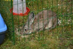 Även en kanin besökte Träffpunkten.