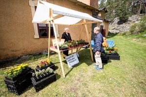 Birgitta Vasiliadou sålde blommor i Uggelbo trädgårds stånd. Pelargoner, petunior och knölbegonior tillhörde favoriterna bland de som köpte.