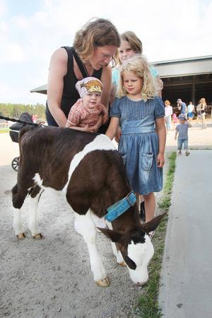 Molly Jakobsson gillar kor. Här får hon klappa en tre veckor gammal kalv tillsammans med mamma Susanne Jakobsson, Ella Jakobsson och Lin Hansson.