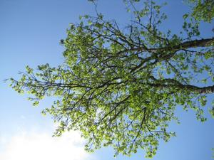 Nu har allting blivit grönt det är så fint och då känner JAG att det är sommar.
