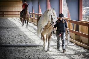 En liten bom på vägen är inget hinder för hästen – om ryttaren reagerar på rätt sätt.