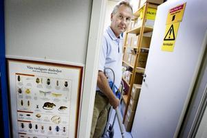 Fullt upp. Anticimex i Gävle har bråda dagar. Enligt chefen Rolf Wickenberg har antalet saneringar av vägglöss ökat rejält