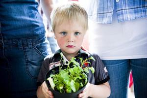 3-årige Teddy Elander visar upp en växt som de större barnen sålt. Själv sparkade han helst boll med sina kompisar.