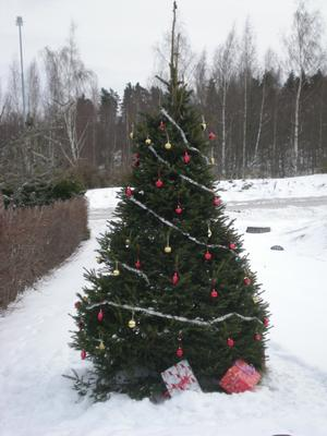 Här är vår julgran, som står precis utanförvår tomt. Den pyntar jag varje år, oftast till advent.Med den gläder vi alla, som går förbi.