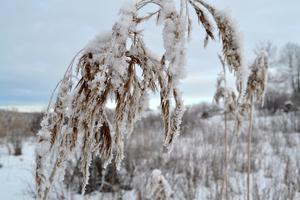Vintern har tagit ett fast grepp om vår natur.