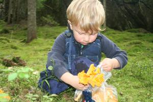 I de djupa skogarna i Dalsland, hemma hos mormor och morfar, plockade vi ca 50L kantareller under fyra dagar. Jakob, 2,5 år, och storebror Elias tyckte själva letandet var roligast. Plocka fick de vuxna göra.