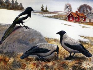 Fåglar var populära bland dåtidens skolbarn; de levde nära människorna. Nils Tiréns skator och kråkor i ett öppet snösmältningslandskap ger vårkänslor.