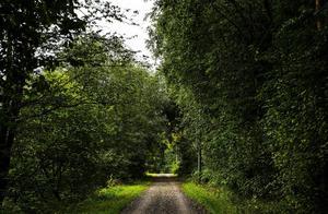 Kvinnan joggade längs Åkanten när mannen överföll henne.
