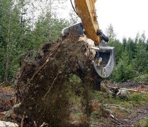 Det är mycket grus och jord som följer med rötterna. Inom en snar framtid tror Lars-Erik Brantholm att de upplockade rötterna kommer att krossas med en speciell maskin direkt i skogen.