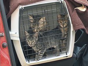 Katter är fantastiska varelser, skriver skribenten som vill se tuffare tag mot ägare som missköter sina djur.