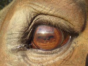 Närbild av mina häst Essence -91. Vi var på promenad och stannade lite i kvällssolen.