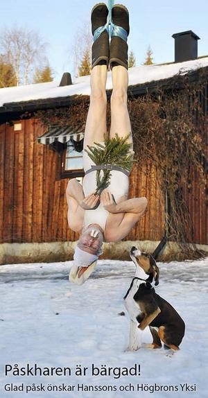 Till bilden på julharen hängdes Björn Hansson upp i en lyftkran.
