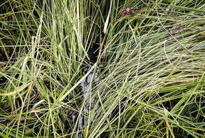 Myrängen fylls av vatten från underjordisk källa.