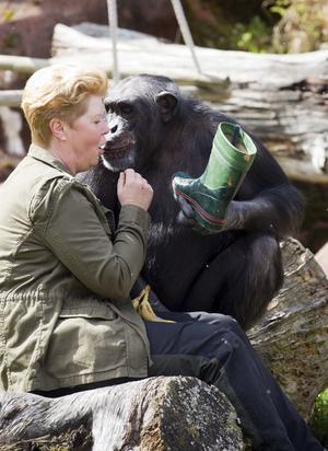 – Det handlar inte om hard feelings eller bitterhet, jag vill bara sätta djuren i fokus. Om Furuviksparkens ledning sträckt ut en hand hade jag kunnat vara till hjälp, säger Ing-Marie Persson. Bilden på henne och Santino är från 2012.
