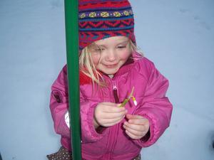 3-åriga Gisela Tjäder plockade en snödroppe hos mormor och morfar i Ede Offerdal den 20-3. Foto: Morfar Sören Söderqvist