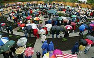 Foto: LASSE HALVARSSON Blöt rosinvigning. Det var paraplyerna som stod för färgprakten när bandet klipptes till rosträdgården i Wij trädgårdar i Ockelbo i går. Rosenbuskarna är ännu unga, utan utslagna blommor.