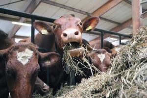 Gräs är fortfarande huvudfödan. När man inte längre har sojafodret vill de till att mjölkbönderna blir ännu bättre på att odla så näringsrikt gräs som möjligt och skörda det i rätt tid.