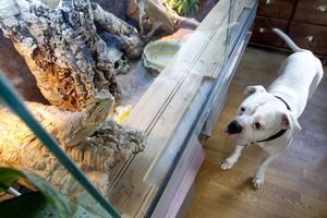 nyfiken. Alice kan sitta i timmar framför terrariet och titta på skäggagamen Frank. Och hon vill inte äta upp honom. När han badar i handfatet brukar hon buffa kärleksfullt på honom med huvudet.
