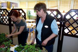 Ann-Sofie Selahn och Helen Otterström driver ett plantloppis i Opalen i Kvissleby.