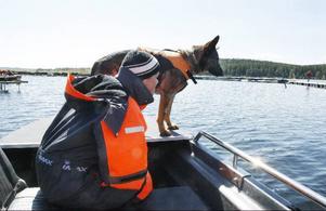 Kriminalsökhunden Cox var ute med sin matte Madelene Lind på eftersök i Kungsgårdsviken på Frösön under gårdagen. Bägge är från Stockholm och ingår i den grupp av Sveriges kriminalsökshundar, som just nu är i länet.