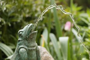 Grodor och vatten i trädgården.