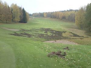 Bilden kommer från Henrik Norén på Golfförbundet som tog bilden 2010 på Bro-Bålsta GK, hål 8. Efter angreppet monterades ett treradigt elstängsel runt hela anläggningen och jakten runt området intensifierades.