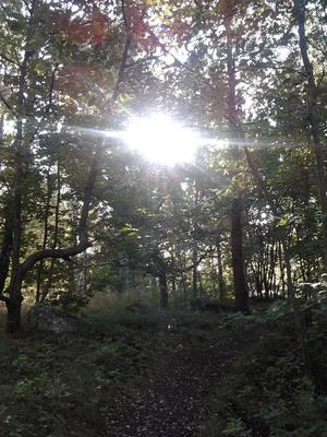 Skogsdunge i höstsol
