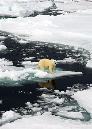 DJUR. Isbjörn på Svalbard, Norge.