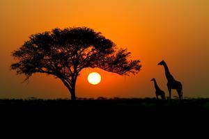 Kenya är känt för sin safari. Men den senaste tidens oroligheter hotar att skrämma bort turisterna.