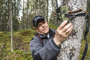 Lars Wiklund sätter upp viltkameror.