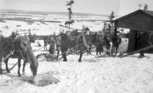 För att transportera allt byggmaterial upp till Nybrobergets topp användes häst och vagn.