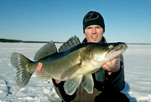 Vilken fantastisk gös. Jonas Asplund tog den på ismete. 5,5 kilo.