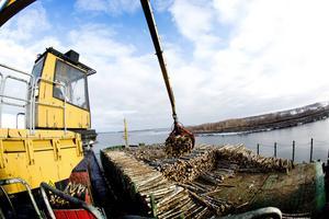 Nyland hade i dag med sig en last på 5 000 ton, som Lennart Näslund uppe i hamnkranen tar hand om. Däcklasten består i dag av 1 000 ton i björkmassaved och under i lastrummet finns det 4 000 ton flis.