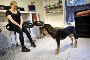 Tiken Leija, 1 1/2 år – en blandras mellan en rottweiler, stövare och hovawart – såg ut att trivas alldeles utmärkt på det nyöppnade hunddagiset Jyckelyckan i Hudiksvall. Tess Hallén är deltagare på Jyckelyckan.
