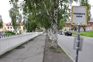 Trädalléerna i centrala Östersund mår inte bra och nu planeras en förnyelse av alléerna längs Regementsgatan.