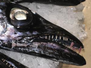 Denna GODA fisk, ESPADA, 1 meter lång och svart, åt vi under en solig semestervecka i febr. 2011.