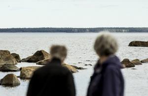 På ön Storjungfrun som breder ut sig bakom de före detta miljönspentörerna var cesiumhalterna höga i bär och svamp.