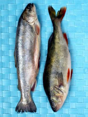 Fet fisk är ett bra sätt att få i sig lite extra av vitamin D nu under hösten.