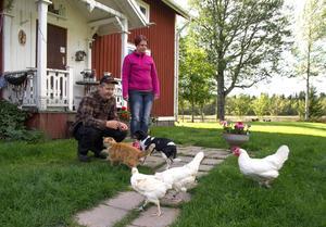 Hundar, höns och katter – när Dan Persson lockar med bröd är intresset stort.