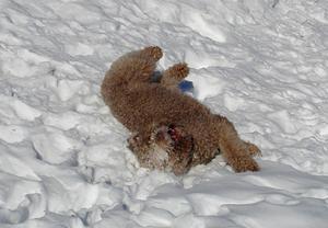 Om inte änglar finns? Då håller Massimo på att göra en snöängel i alla fall.