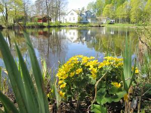 Vackert vid den lilla sjön i Gisslarbo