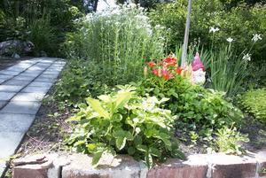 De började med perennbacken längst bort i trädgården.