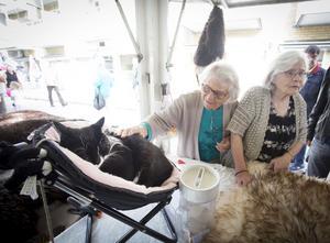 Katten Sören blir gärna klappad och har dragit in över 600 000 kronor till katthjälp. Margot Johansson och Ulla Adeen var speciellt förtjusta och stannade en stund vid den speciella katten.