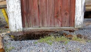 Den gamla syllen som bär upp hela uthuset börjar vittra sönder. Här har uthuset lyfts cirka 15 centimeter, något som har tagit flera timmar att åstadkomma.