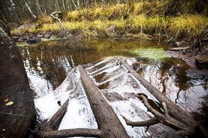 Döda träd i skogsbäckar har visat sig kunna fyrdubbla antalet öringar i vattendraget.