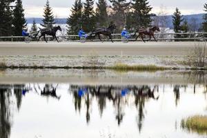 Studien på Wången ska pågå fram till december nästa år. Totalt ingår 16 unghästar i studien.