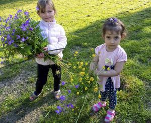 Sana och Ulia har blivit kompisar i Gideå och plockade för första gången blommor till en midsommarstång. Foto: Inga-Britt Rosenqvist.