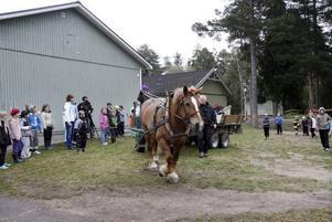 Flaket fylldes när kommunens egen häst Berta kom till friskolan Lyftet i Andersberg för att hämta skräp.
