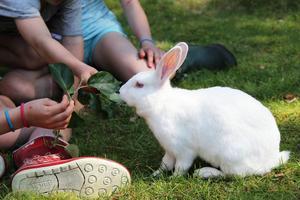 Barnen tycker att det är roligt att mata kaninerna.